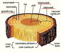 Hardwood Specs | Select Wood Floors